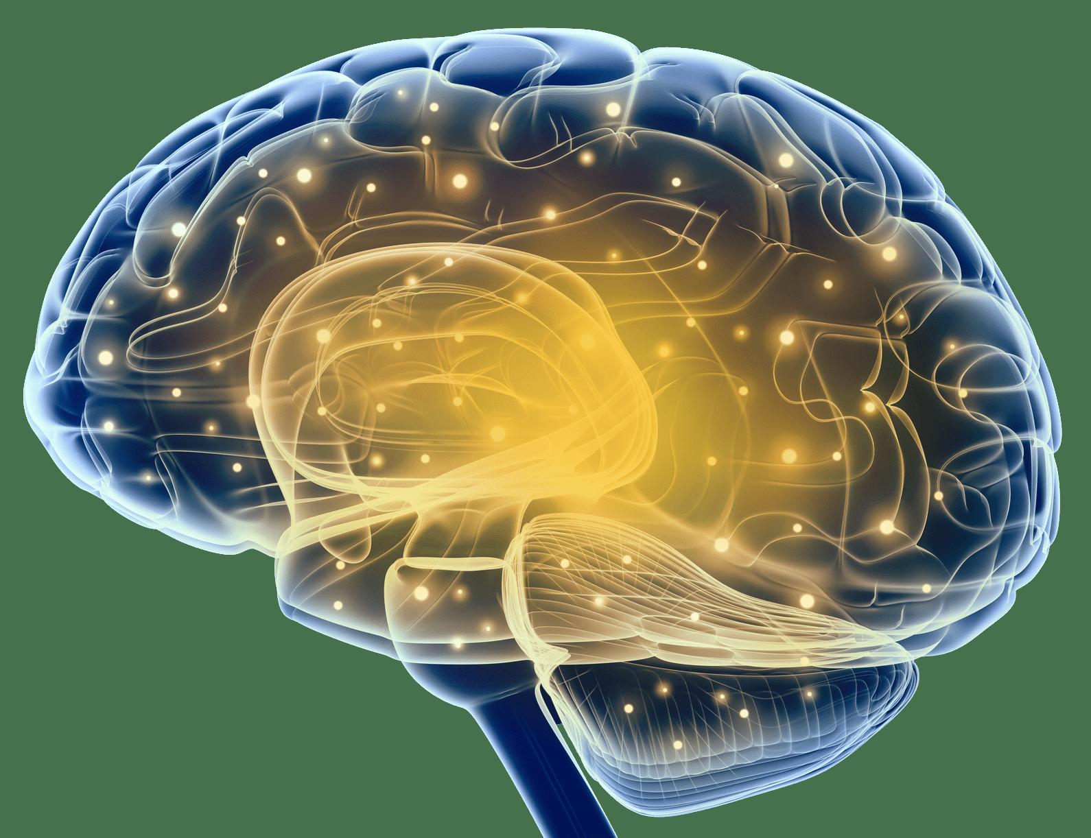 Brain-min.png